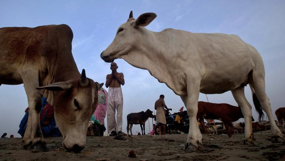 Ban on Trade of Cattle for Slaughter – does the Centre have the Power?