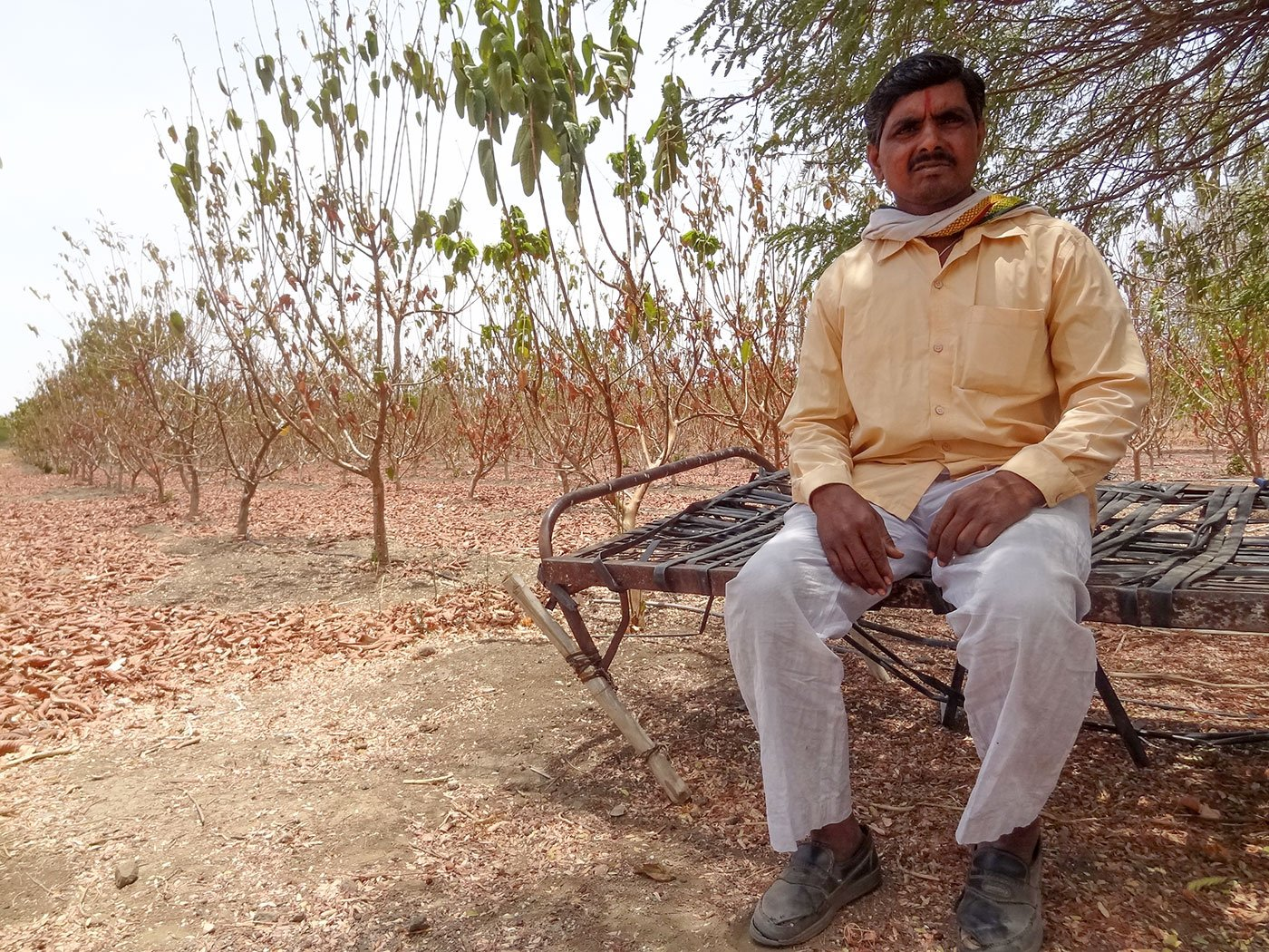 Prahlad's Painful Choice: Cows or Guavas?