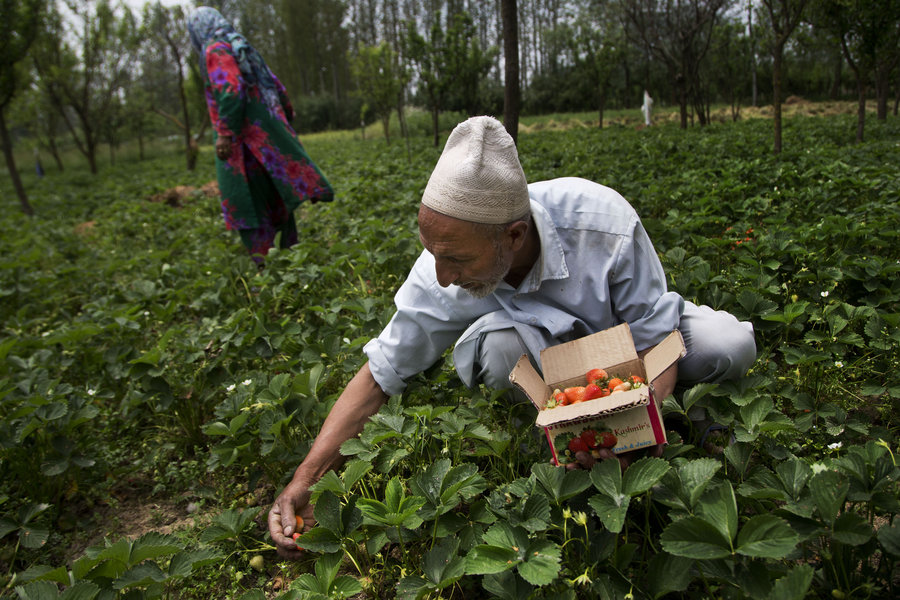 Land reforms, low rural poverty, and the role of Article 370 in Kashmir