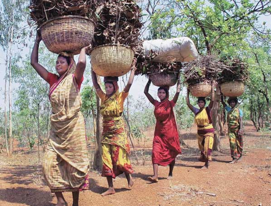 We Will Take Our Forest Rights