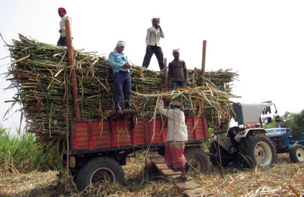 Maharashtra cane-cutters: Women, children face hardest brunt of exploitative conditions